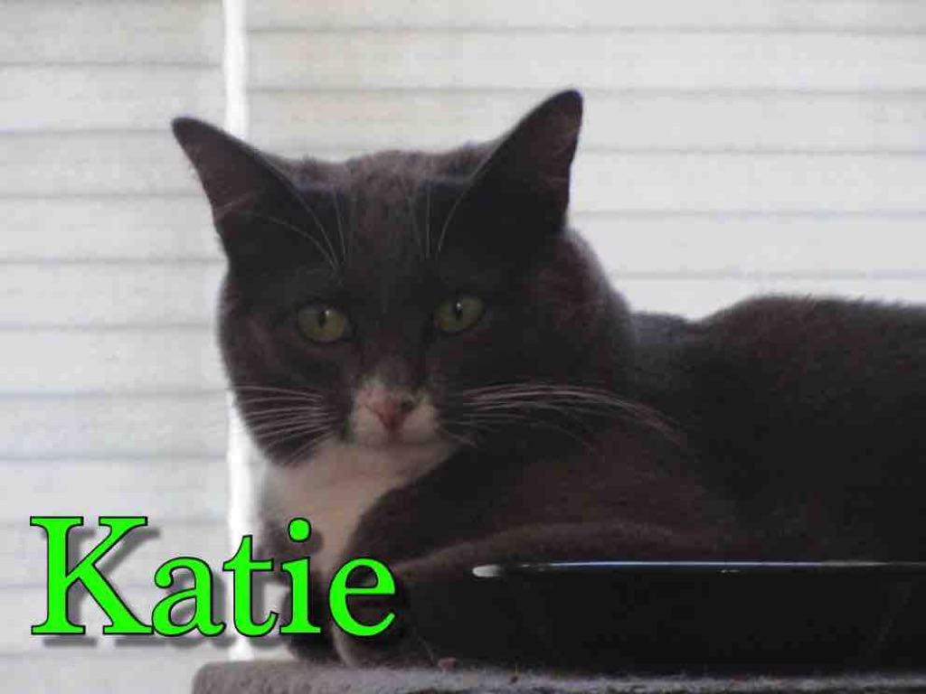 katie name left sm